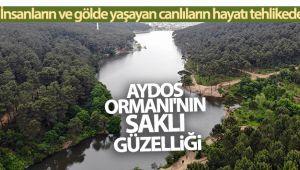 Aydos Ormanı'nın 'saklı güzelliği' olan göle akan atıklar ve kirli sular canlıları tehdit ediyor