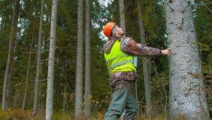 Ardahan Orman İşletme Müdürlüğü akaryakıt alımı yapacak